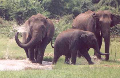 elephants hyderabad zoo india photo vCy6F 35628