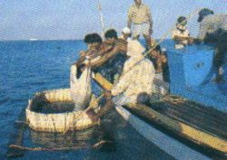 fish production india88