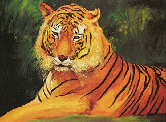 indian tiger might just be left in pictures