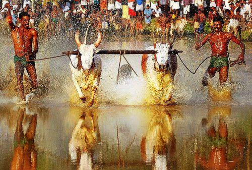 Maramadi race in Anandapalli