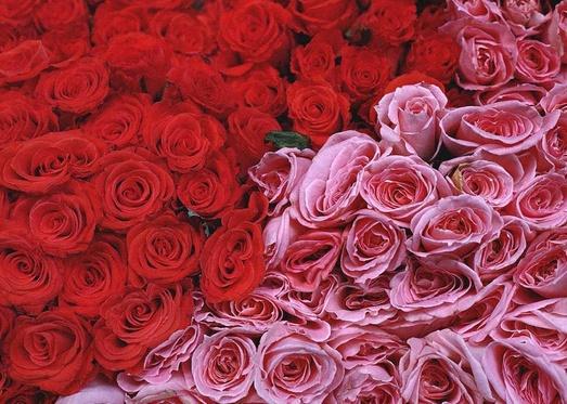roses thumb hO9lu 18163