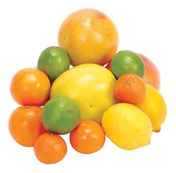 scculent fruits 92cfu 30213