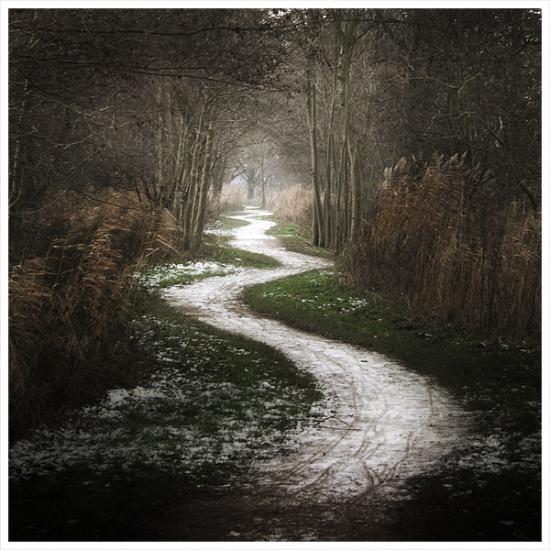 the white path     by mosredna VAs9K 6943