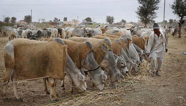 Agrarian economy