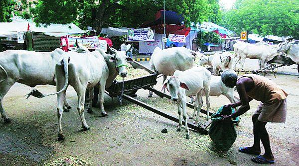 Quresh community left jobless
