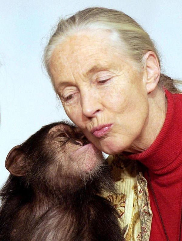 "British wildlife biologist Jane Goodall gets a kiss from one-year old orphaned chimpanzee Pola,  during her visit to the Municipal Zoo in Budapest, Hungary, Monday, Dec. 20, 2004. Goodall came to Hungary to attend the board meeting of the Hungarian branch of the ""Roots and Buds"" network founded by herself in 1991. (AP Photo/MTI, Barnabas Honeczy)"
