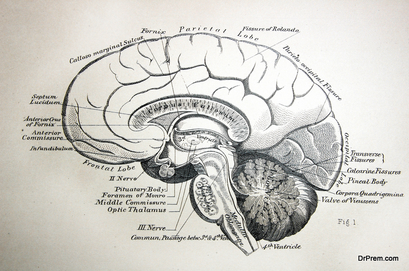 Biology of brain