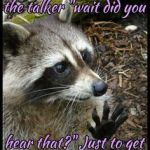 Top Best 24 Raccoons Captions with Texts and Photos