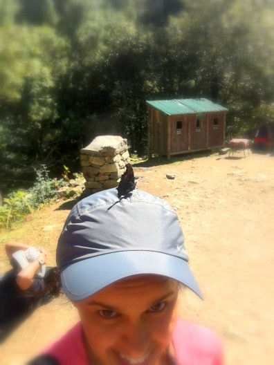A butterfly decided to squat on my head and happily stayed there for a while!