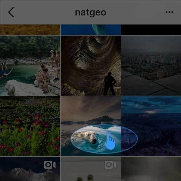 Скачать фото и видео из 📷 Инстаграма на компьютер или ...