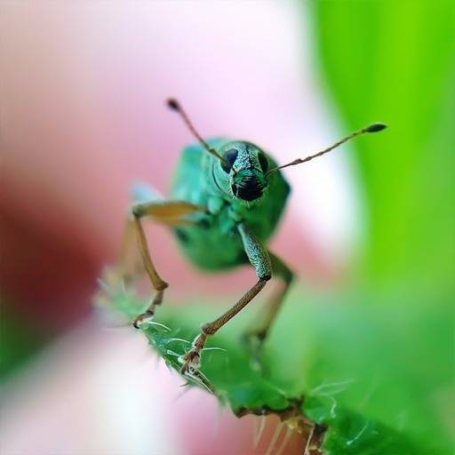 How to do amazing pics with your iPhone Macro Lens