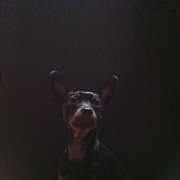 todo in the dark