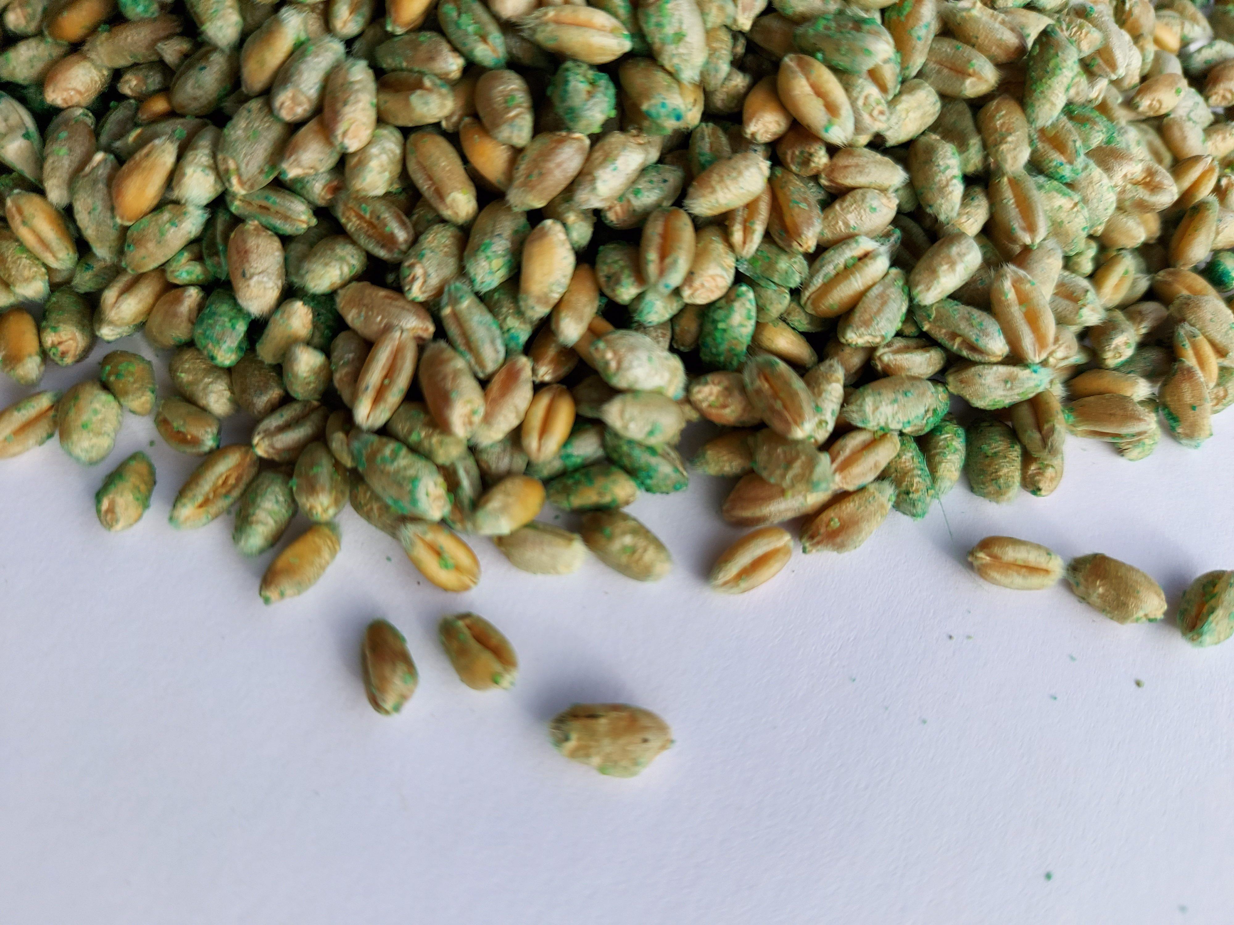 Biobeitze Samen Weizen