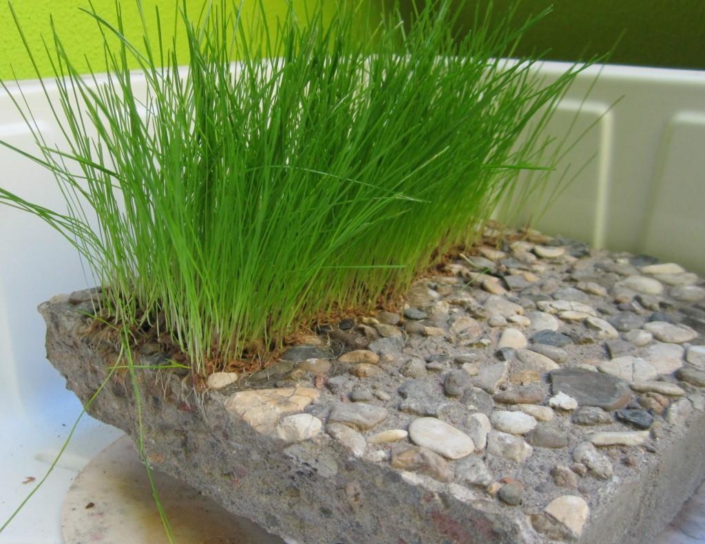 Rasen auf Beton