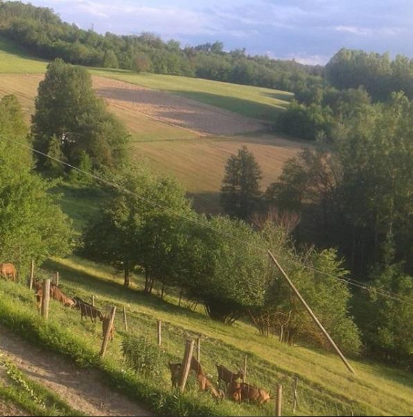 I Pascoli di Amaltea - A view of the fields