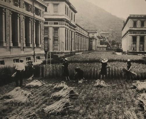 Ferrania, growing wheat during the war