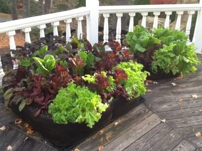 Pictures Of Garden fabric raised bed vegetable gardens | instant organic garden