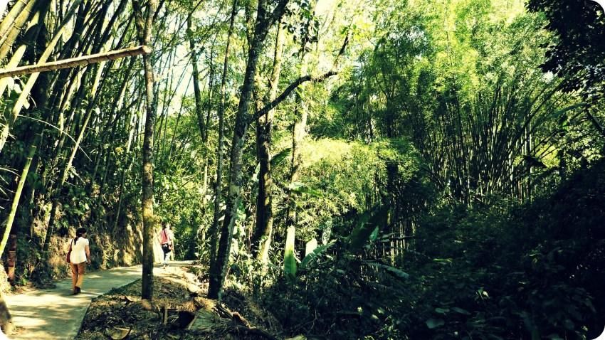 Forêt d'arbres au Parque de la Vida à Armenia