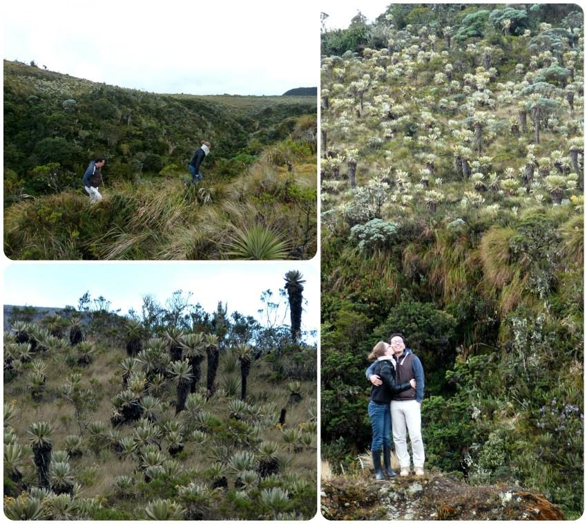 paisajes del paramo en el parque natural Puracé