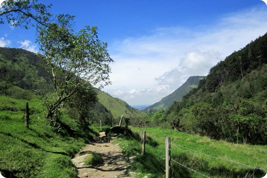 árbol viejo en un camino del valle de Cocora