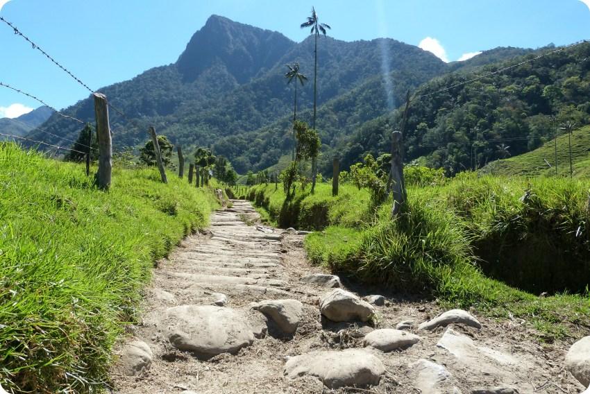 Ceroxylon quindiuense Palma de cera en el camino en el valle de Cocora
