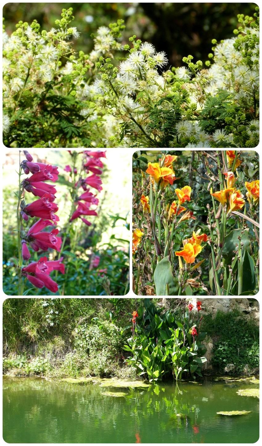 Fleurs et plantes à Aguas Tibias de Coconuco