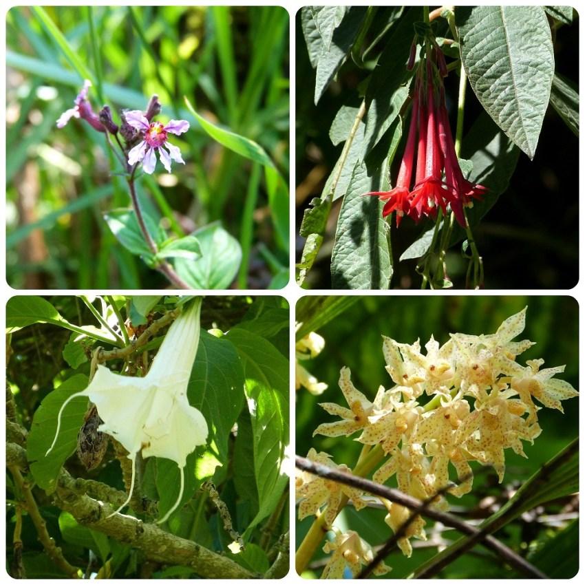 Flores del valle de Cocora