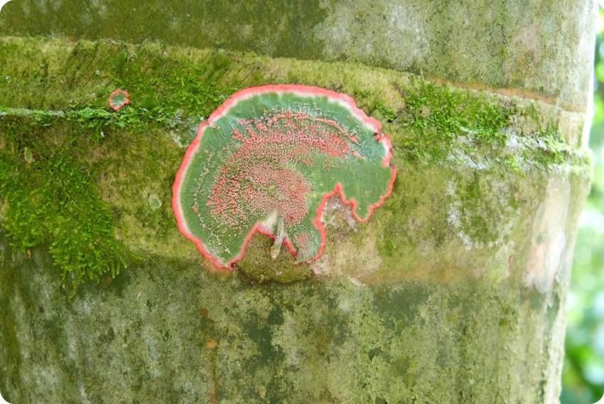 Lichen sur de la guadua au jardin botanique du Quindío à Calarcá