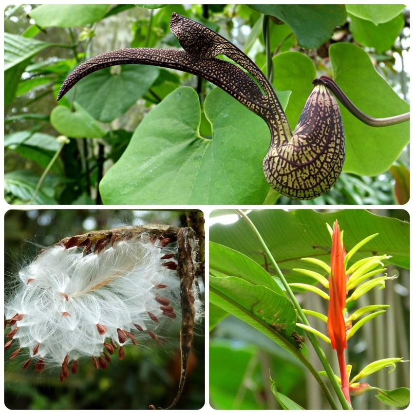 Plantas del jardín botánico del Quindío en Calarcá