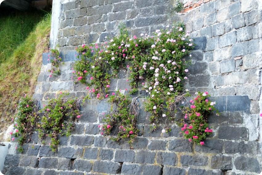 fleurs sur un mur au Santuario de las Lajas de Ipiales