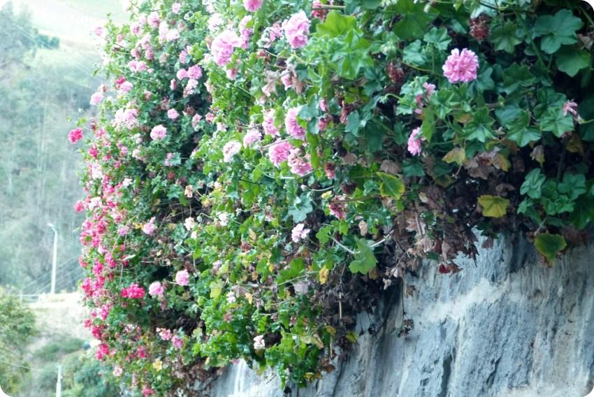 fleurs au Santuario de las Lajas de Ipiales
