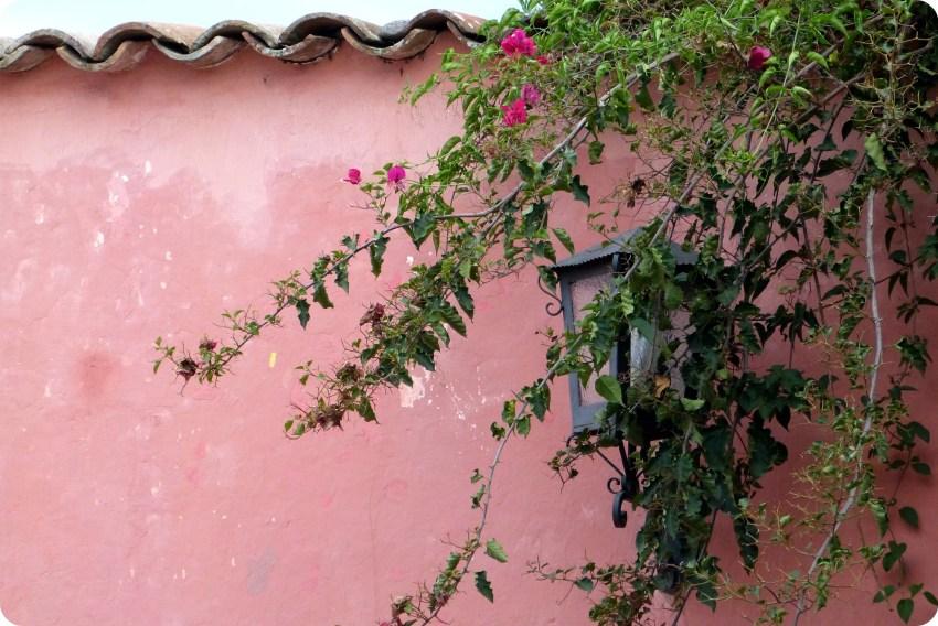 muro rosafa del patio de la casa de la cultura de Popayán