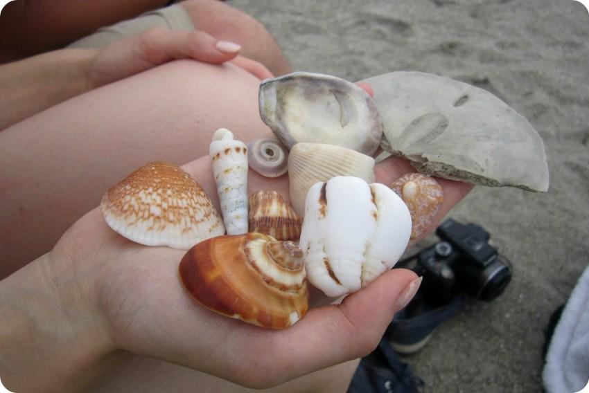 Coquillages trouvés sur la plage de Pedernales