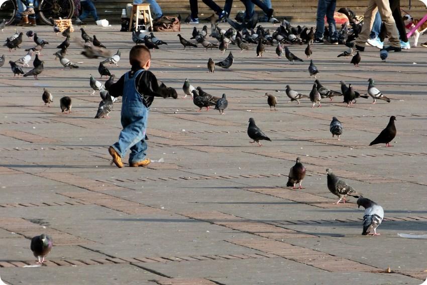 niño corriendo detras de palomas en la Plaza Bolivar de Bogotá