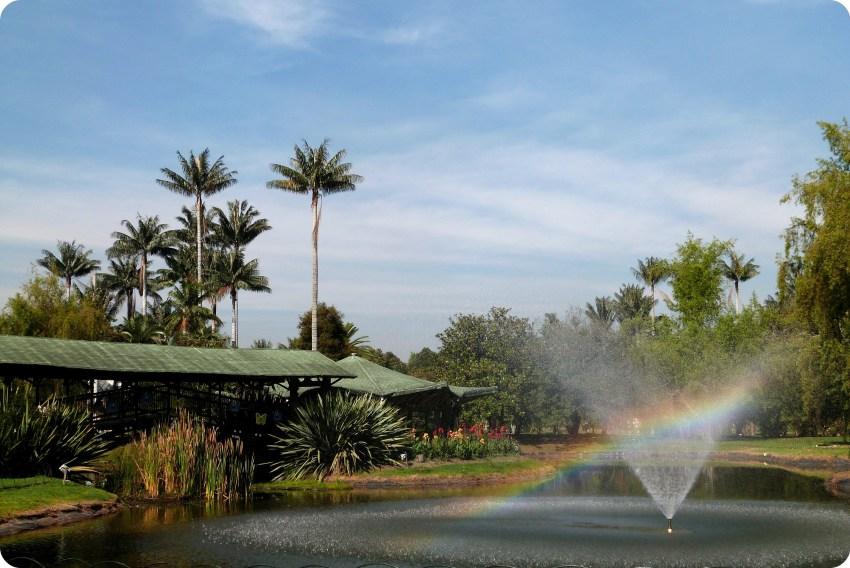 fuente y palma en el jardín botánico de Bogotá