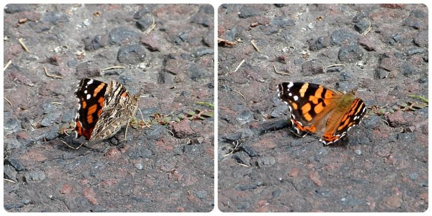 mariposa en el suelo de la Mitad del Mundo de Quito