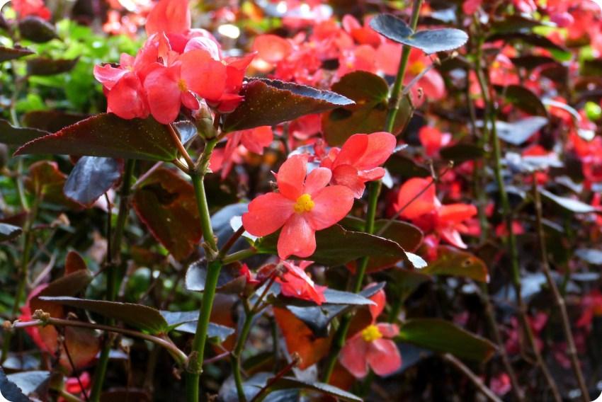 Flores en el patio del Museo Botero de Bogotá