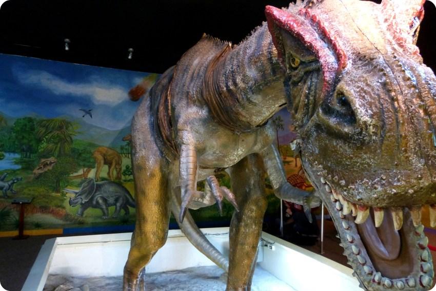 Dinosaurio en el Museo de Historia natural de Quito : Allosaurus fragilis