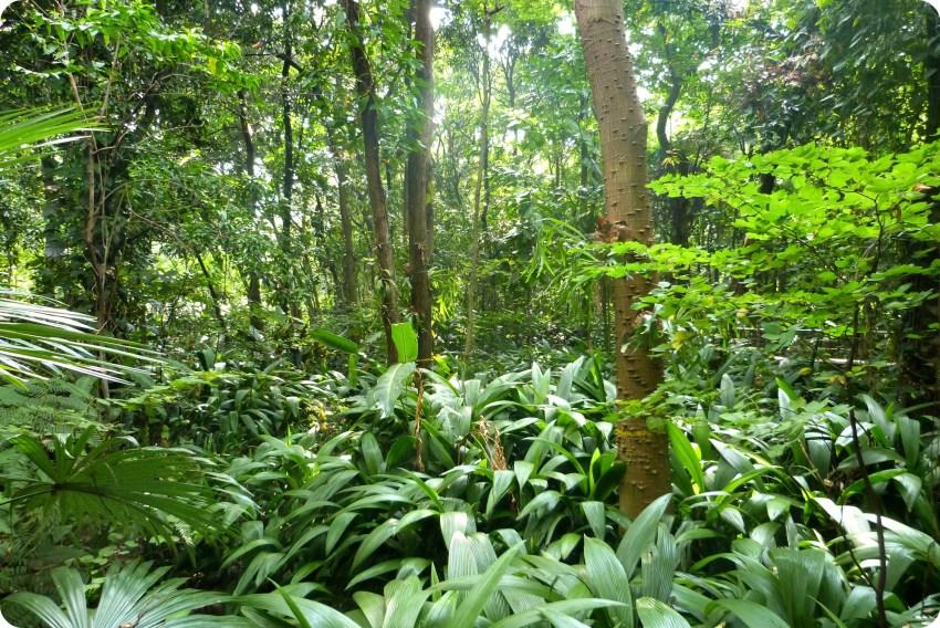 Pequeño bosque en el jardín botánico de Medellín
