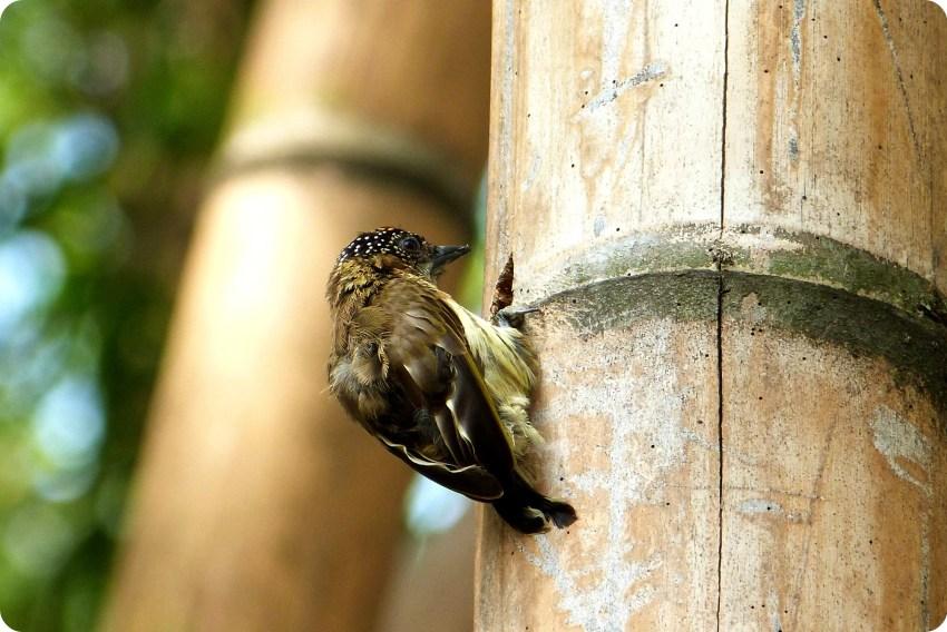 ave sobre un tronco de guadua en el jardín botánico de Medellín