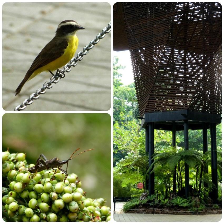 ave y chinche en el jardín botánico de Medellín : Pitangus sulphuratus