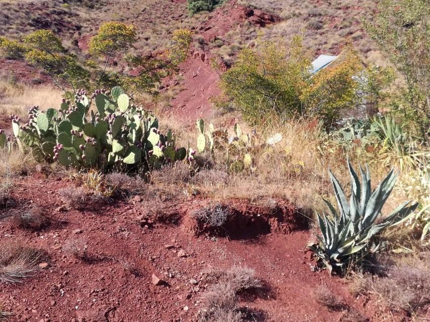 flore désert hérault voyage vélo