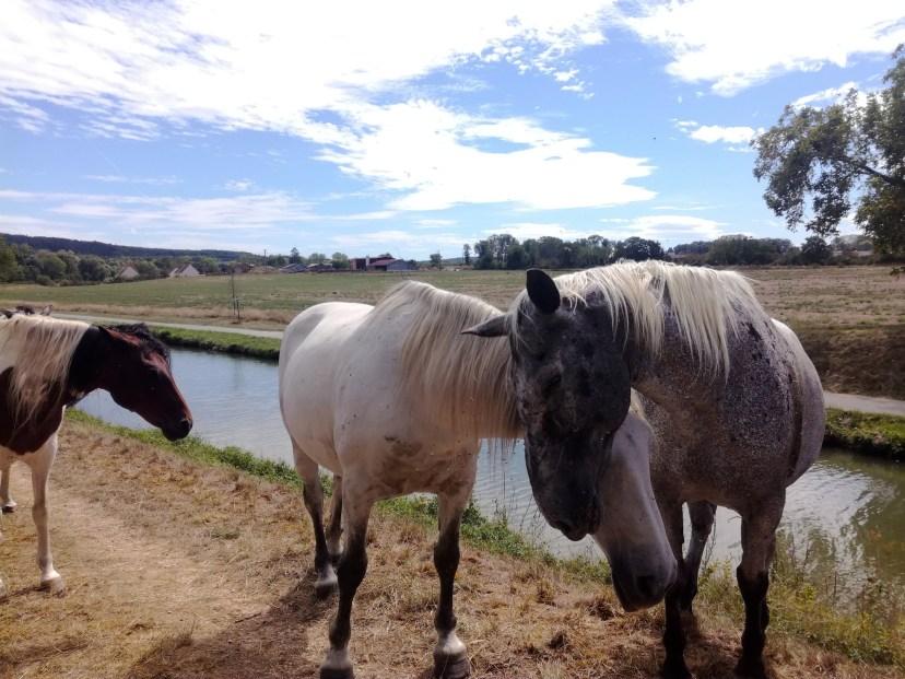 canal du nivernais yonne voyage vélo chevaux