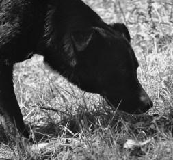 Instinct de Chien - Education, rééducation canine à domicile en Drôme Ardèche - Comportementaliste sur Montélimar et Aubenas - Cours de pistage et cavage