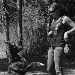Instinct de Chien - Education, rééducation canine à domicile en Drôme Ardèche - Comportementaliste sur Montélimar et Aubenas - Cours collectif en ville