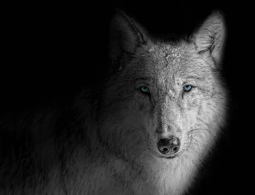 L'homme aux loups et les problèmes de sexuation