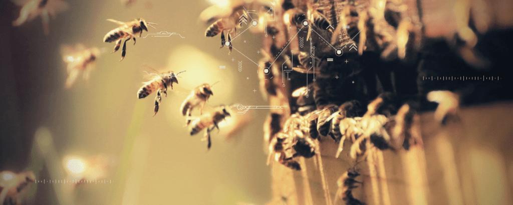 Smart Hives- Conservation using smart technology