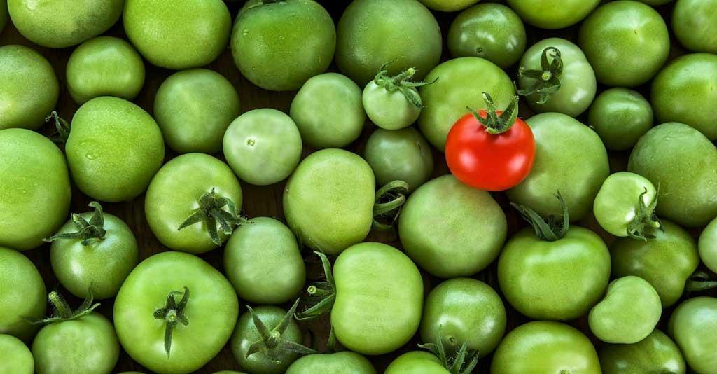 Empreendedorismo no Agronegócio - Proposta Única de Valor