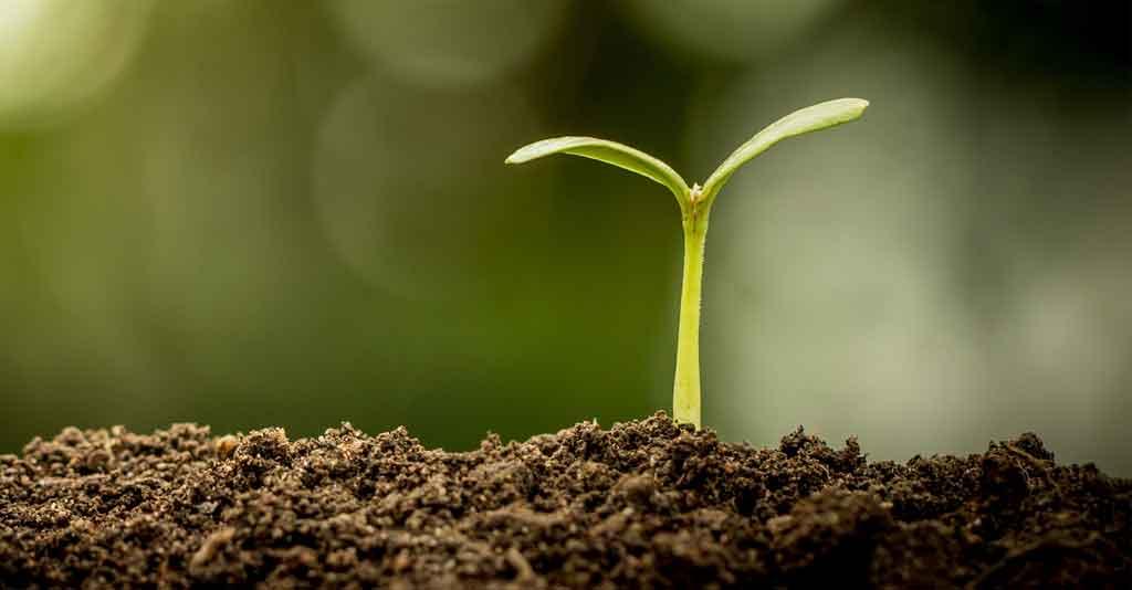 Fertilidade do solo