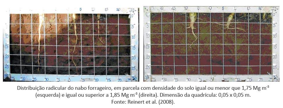 Escarificação do solo: impactos no crescimento radicular e na produtividade